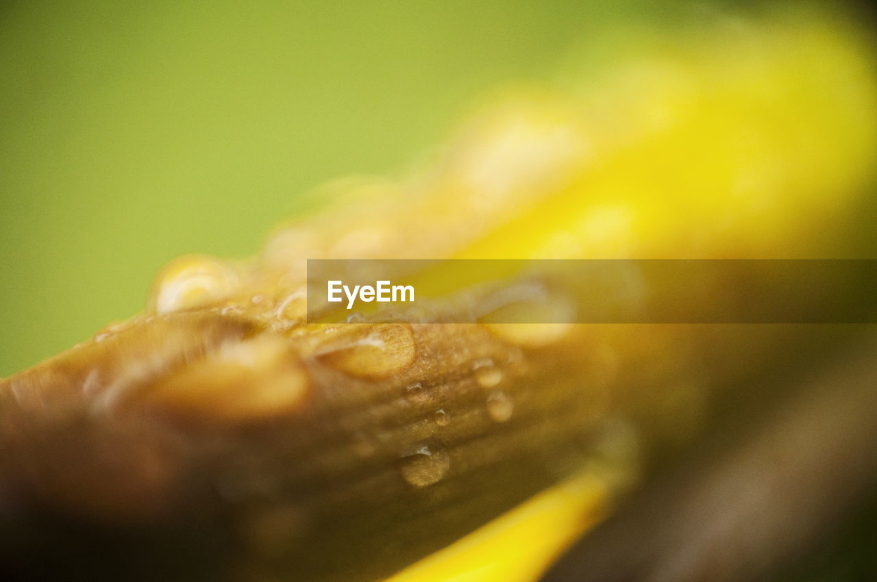 selective focus, close-up, no people, food and drink, freshness, food, still life, yellow, nature, beauty in nature, textured, drop, extreme close-up, outdoors, fruit, plant, macro, day, wood - material, water, purity