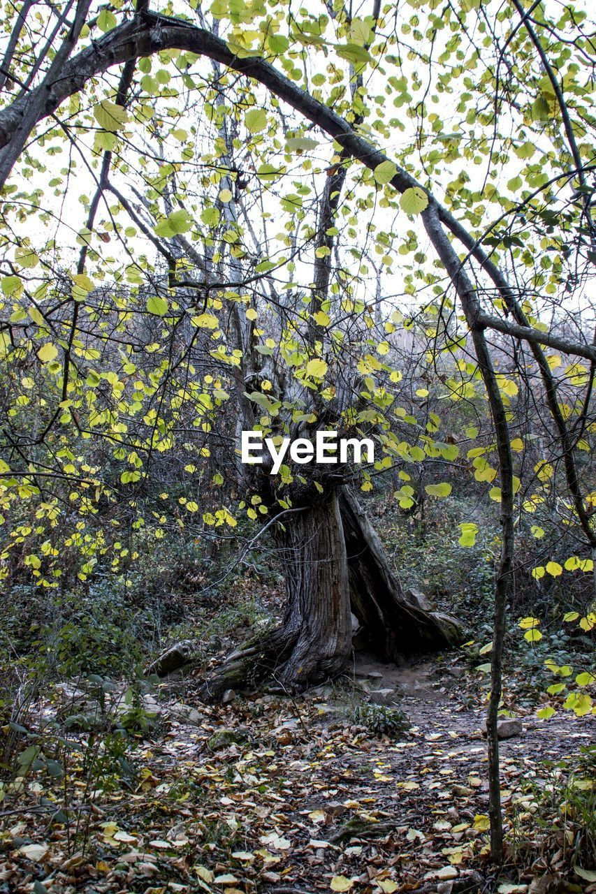 tree, branch, nature, growth, leaf, day, no people, beauty in nature, outdoors, forest, autumn, tranquility, flower, tree trunk