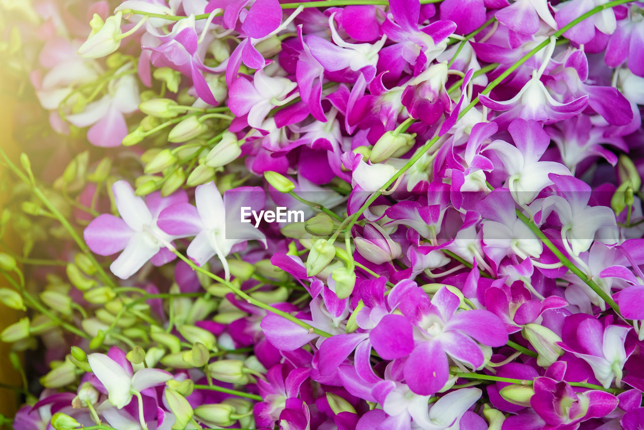 flower, purple, petal, beauty in nature, fragility, nature, pink color, growth, no people, freshness, outdoors, flower head, blooming, plant, close-up, day