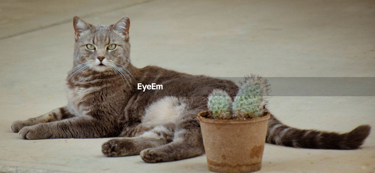 Portrait of cat sitting by potted cactus plant