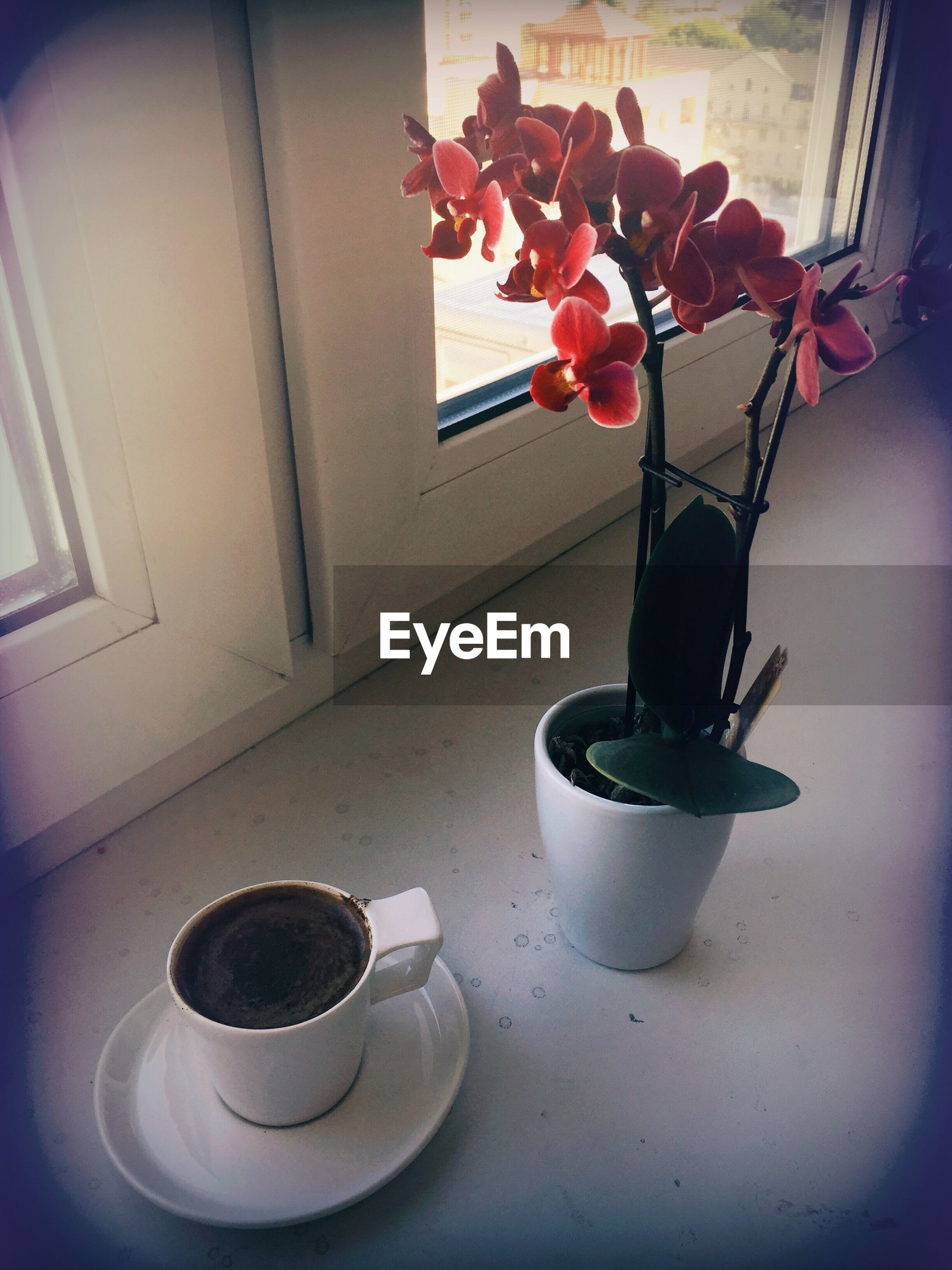 indoors, flower, freshness, vase, window sill, red, arrangement, no people, fragility, fruit bowl