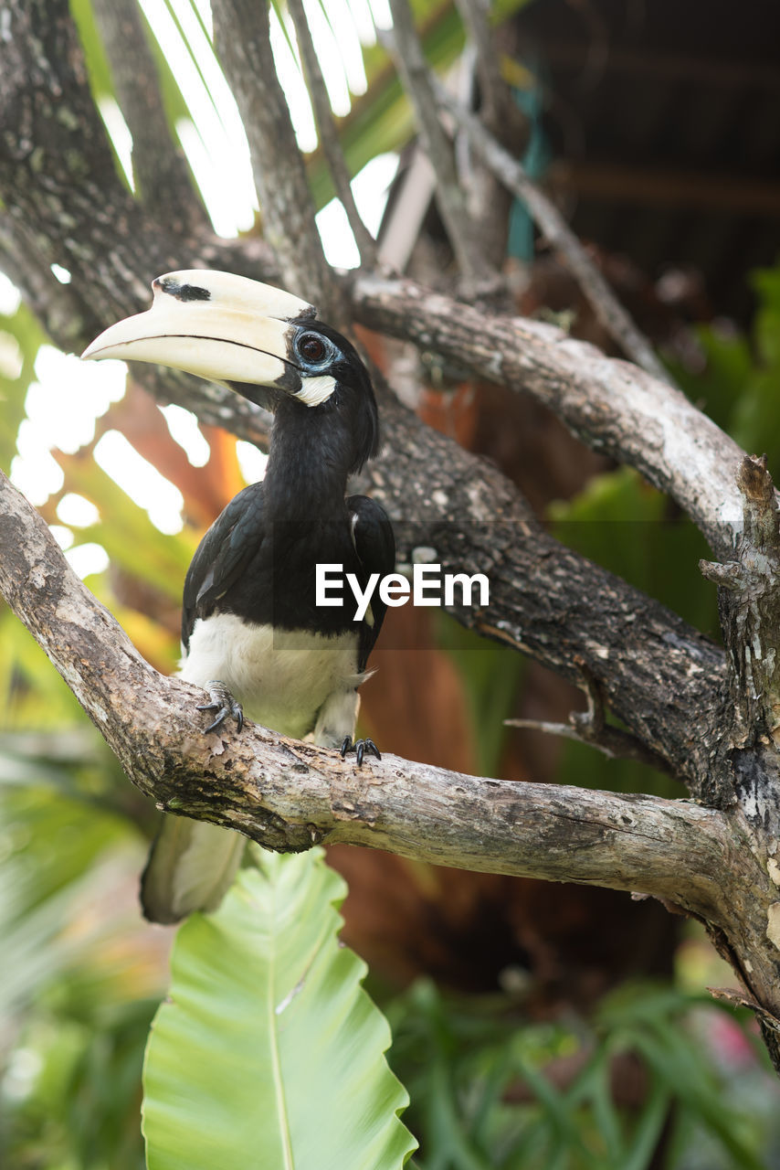 vertebrate, bird, animal wildlife, animal, animal themes, perching, animals in the wild, one animal, tree, plant, focus on foreground, branch, no people, day, nature, outdoors, black color, low angle view, close-up, full length