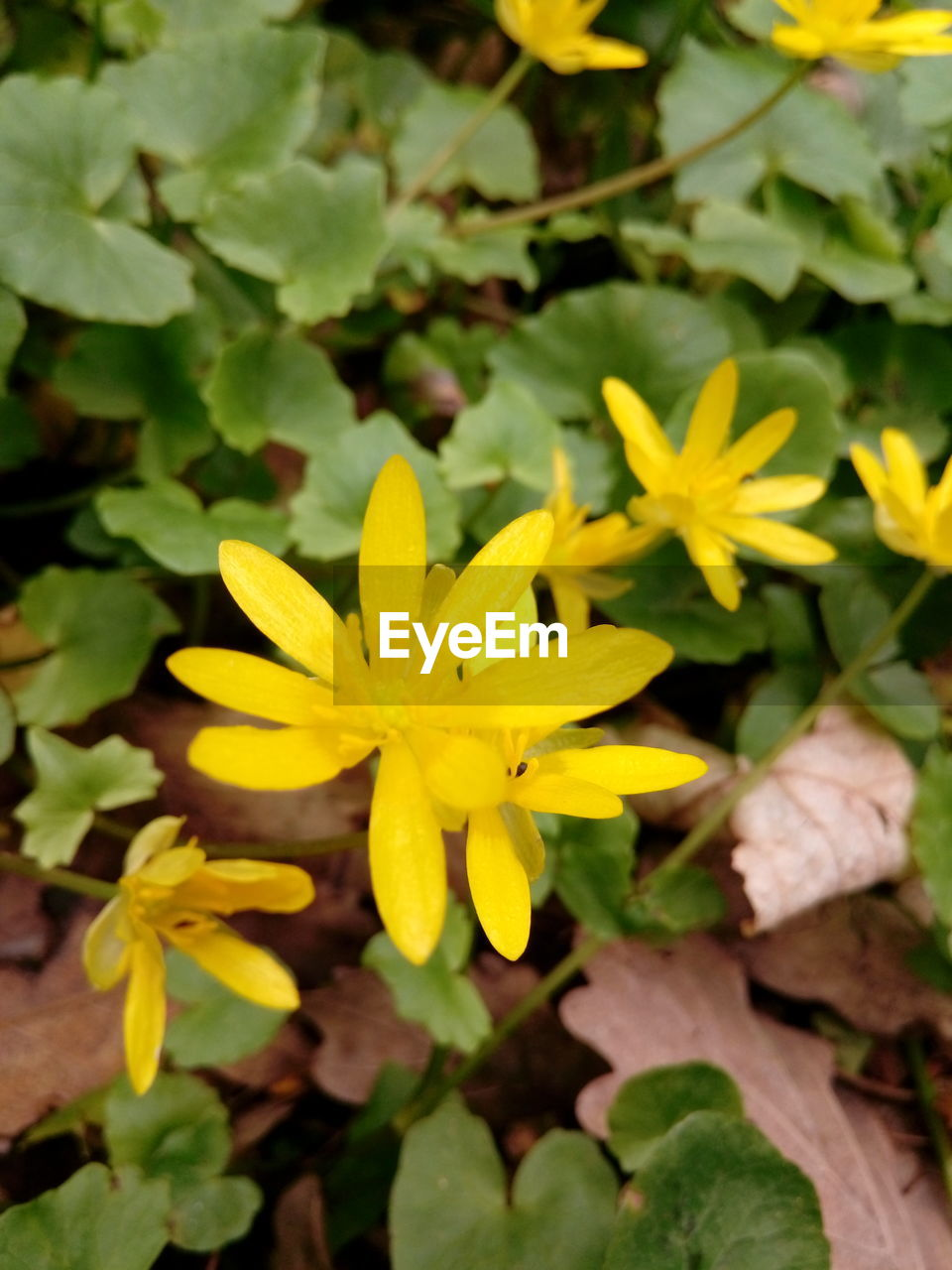 flower, flowering plant, plant, freshness, vulnerability, fragility, yellow, growth, beauty in nature, close-up, petal, inflorescence, flower head, leaf, plant part, nature, day, no people, high angle view, field, outdoors, pollen