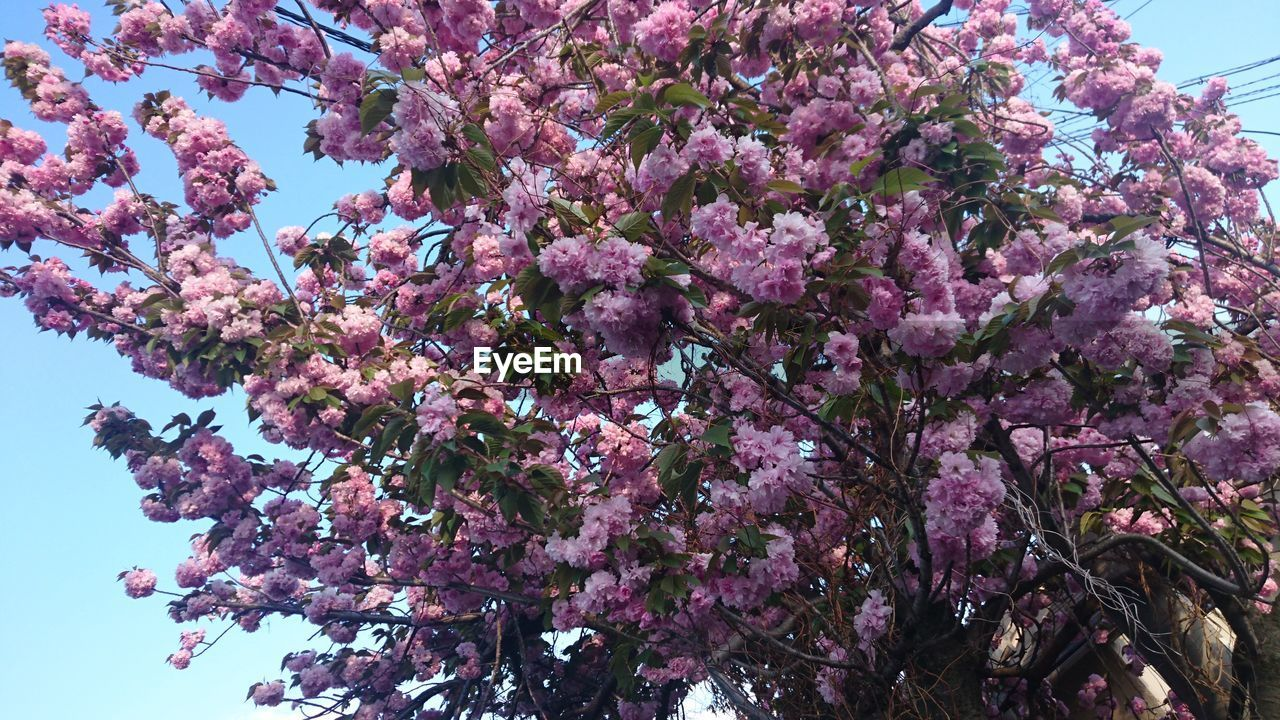 flower, growth, fragility, beauty in nature, blossom, tree, nature, freshness, pink color, springtime, botany, no people, low angle view, branch, petal, day, outdoors, blooming, flower head, close-up, sky