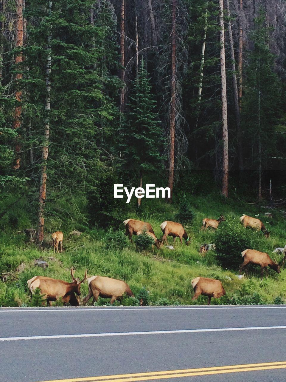 Herd of deer in forest