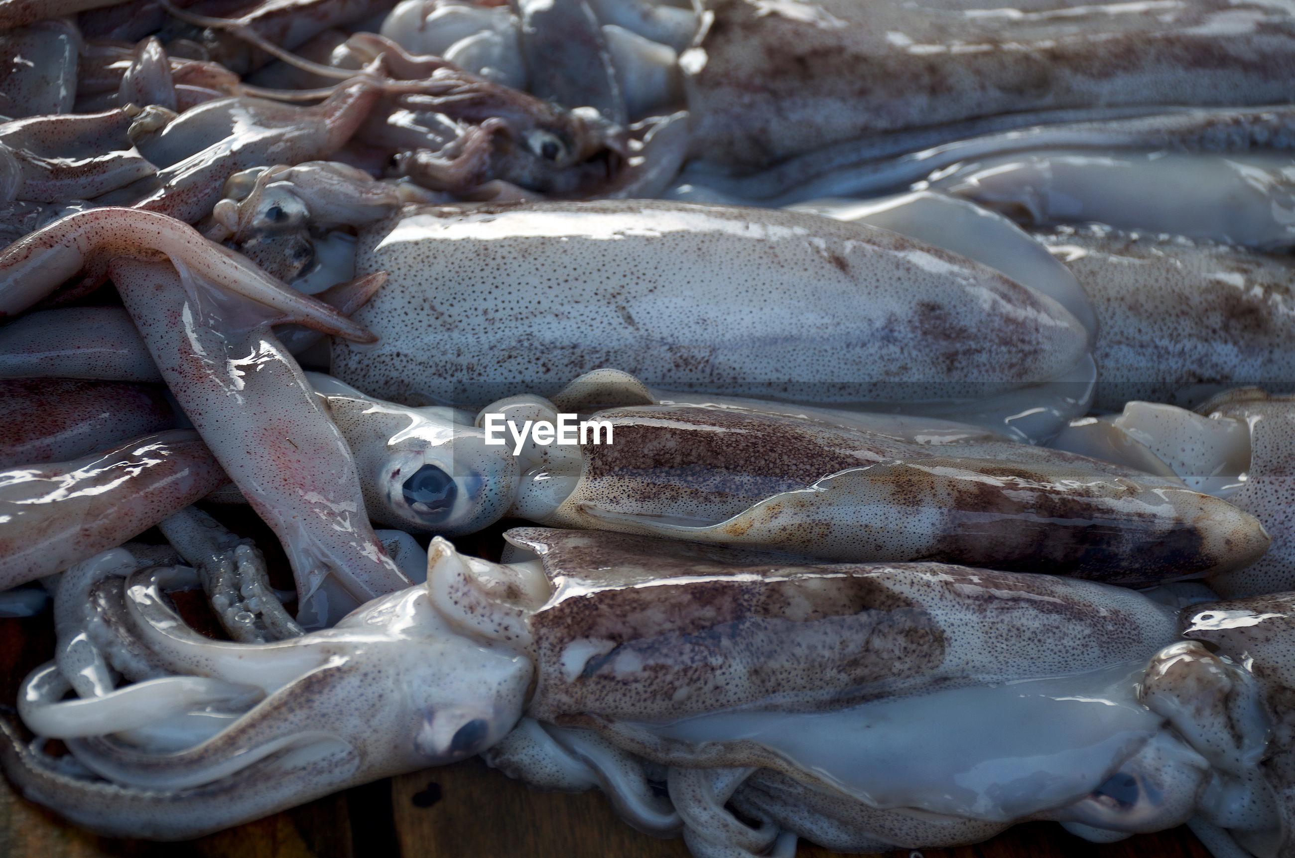 HIGH ANGLE VIEW OF FISH ON METAL