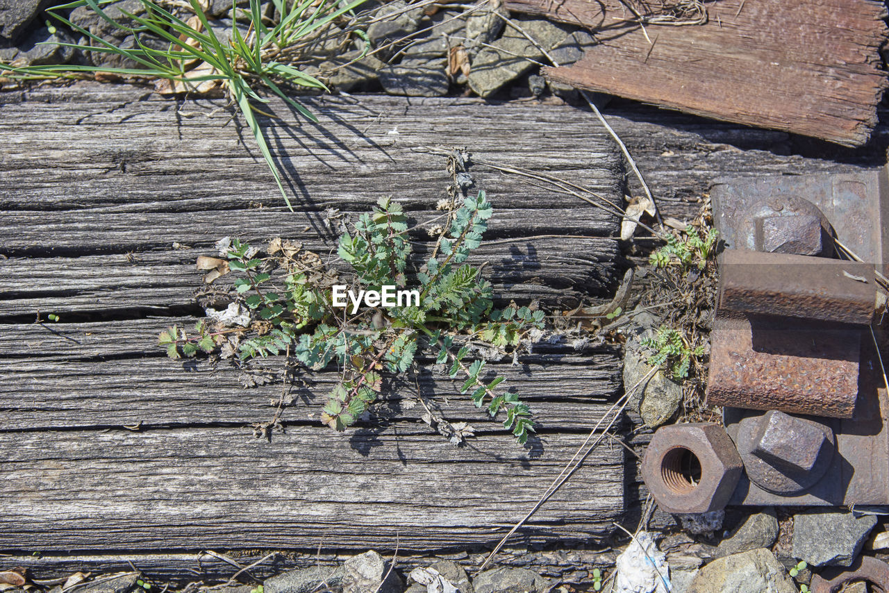 HIGH ANGLE VIEW OF PLANTS GROWING BY BOARDWALK