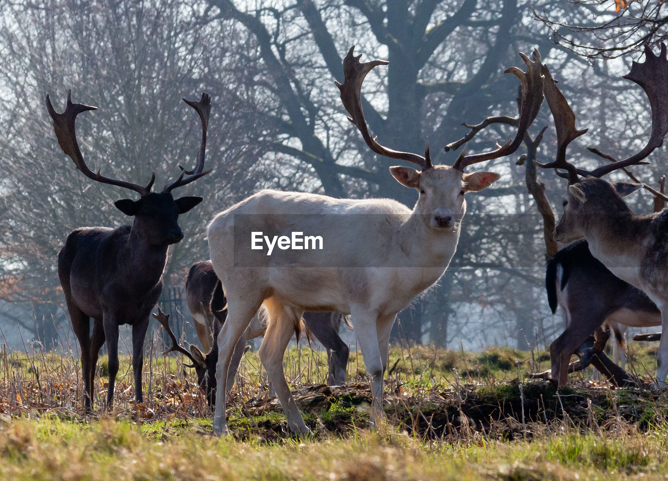 animal, animal wildlife, deer, animal themes, group of animals, animals in the wild, land, vertebrate, field, antler, plant, tree, mammal, nature, day, standing, no people, horned, two animals, herbivorous, outdoors, herd