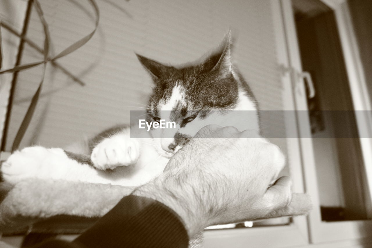 Cropped Image Of Man Punching Cat At Home