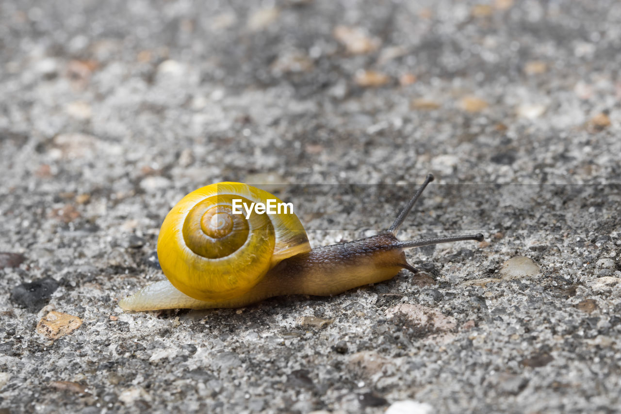 one animal, snail, animal themes, gastropod, animals in the wild, close-up, nature, outdoors, day, no people, fragility, animal wildlife, yellow