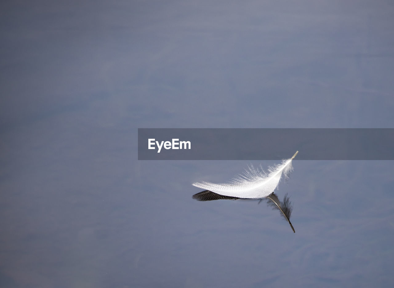 Close-Up Of Feather Floating On Lake