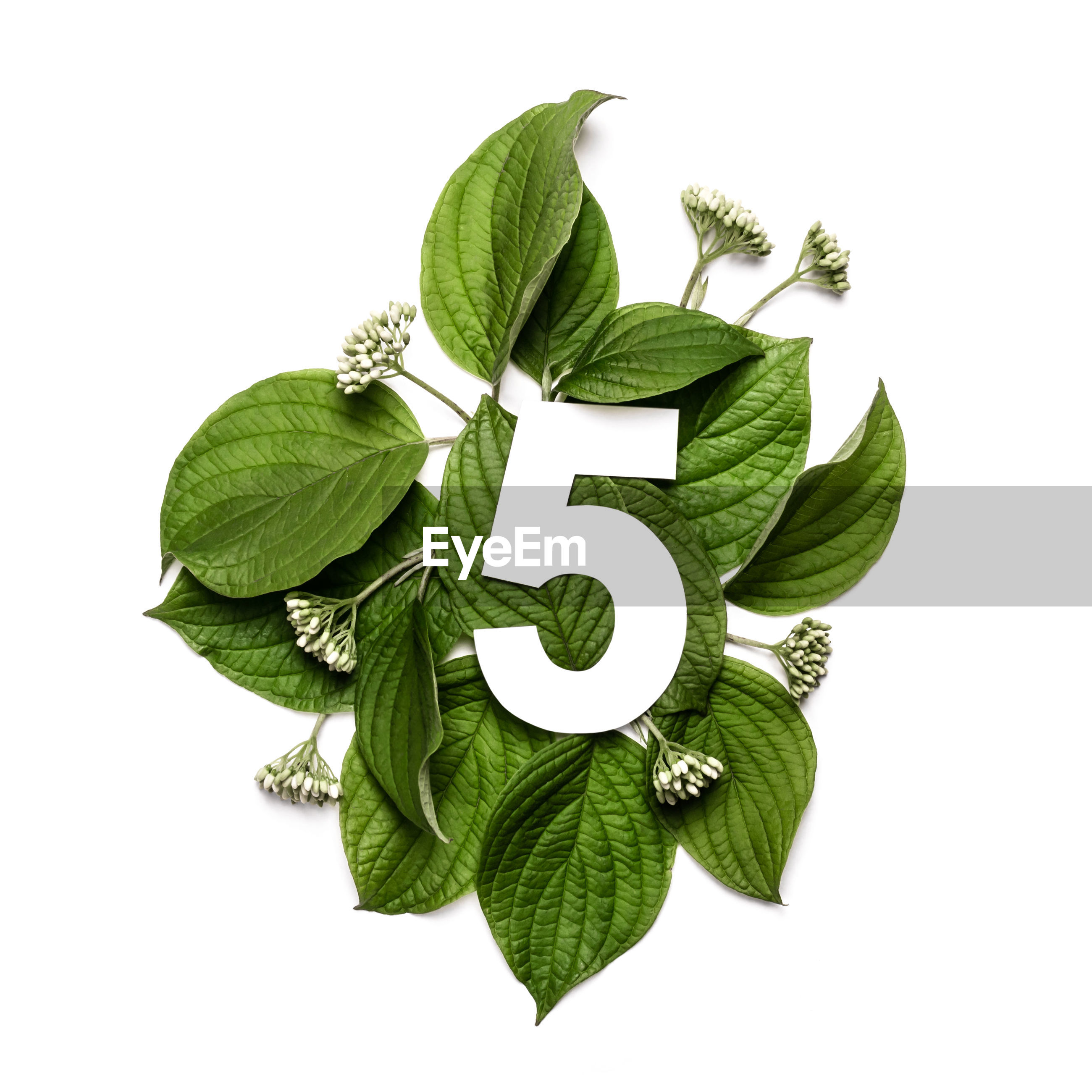 CLOSE-UP OF GREEN LEAVES WITH WHITE BACKGROUND