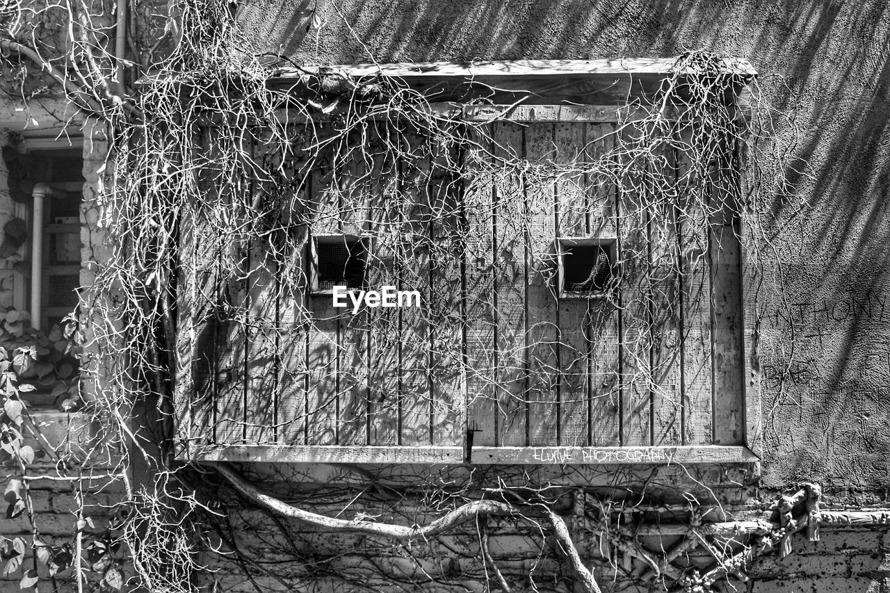 architecture, built structure, building exterior, abandoned, building, day, no people, old, plant, house, damaged, deterioration, obsolete, decline, run-down, outdoors, wood - material, tree, window, nature, ruined