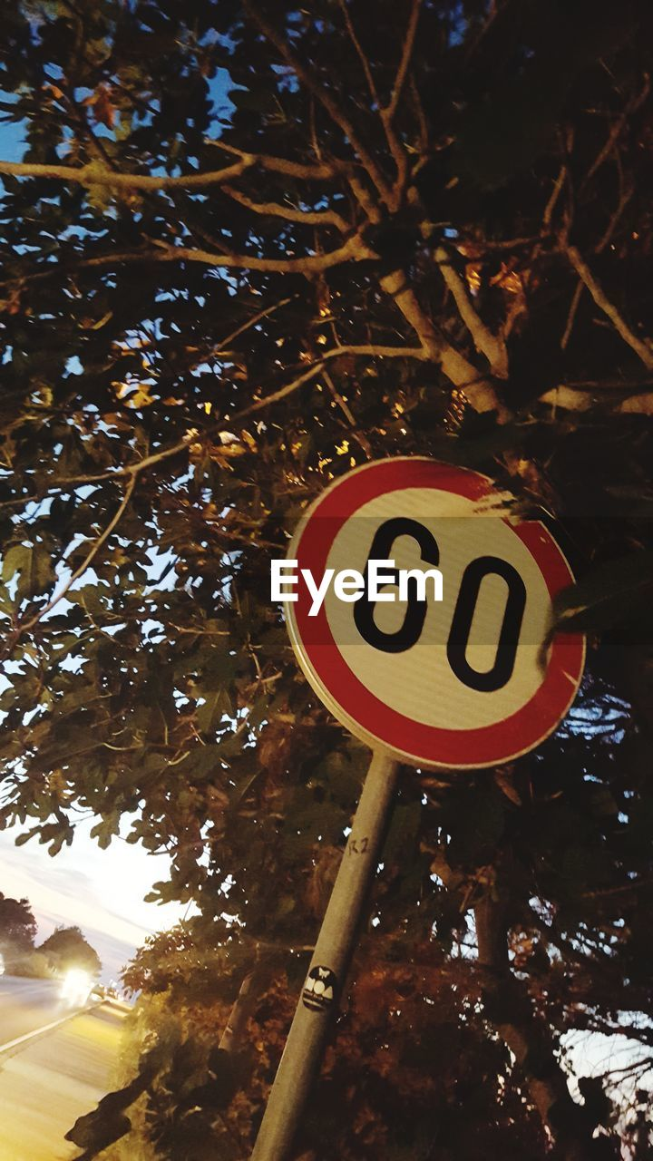 tree, communication, sign, road sign, plant, road, day, nature, warning sign, low angle view, no people, guidance, outdoors, text, sunlight, close-up, branch, focus on foreground, information, shape