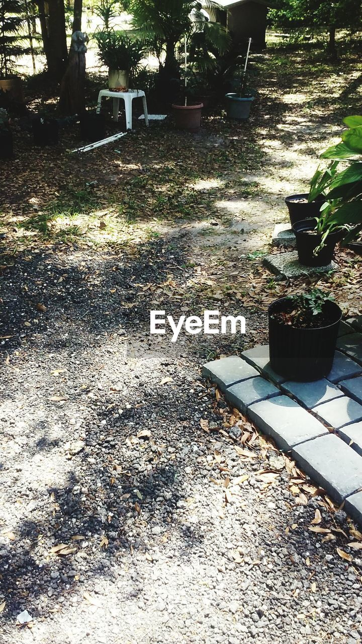 growth, sunlight, plant, day, outdoors, no people, potted plant, nature, front or back yard, shadow, tree, grass