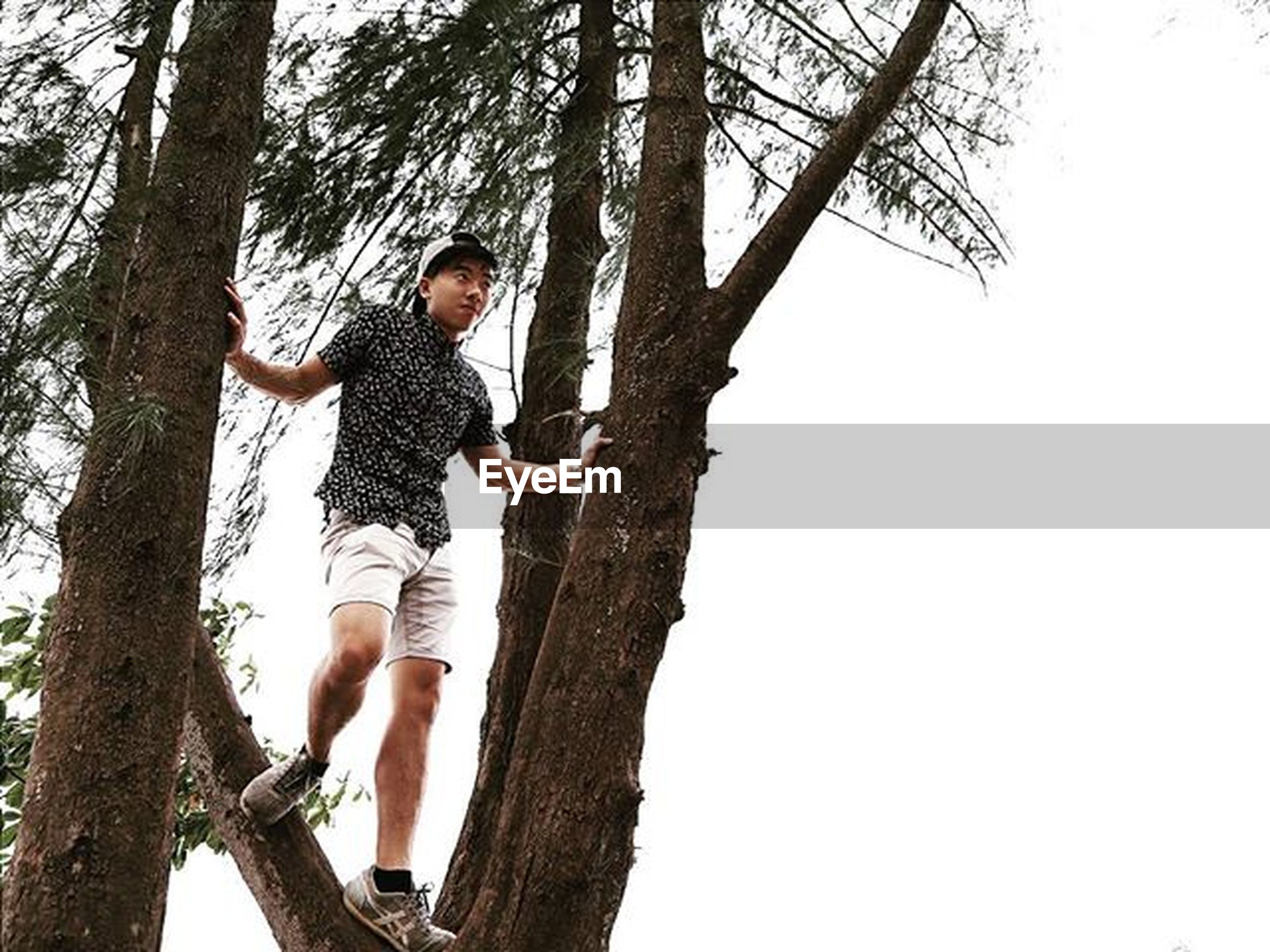 tree, full length, animal themes, leisure activity, low angle view, tree trunk, lifestyles, branch, clear sky, childhood, togetherness, nature, forest, bare tree, day, standing, one animal, casual clothing