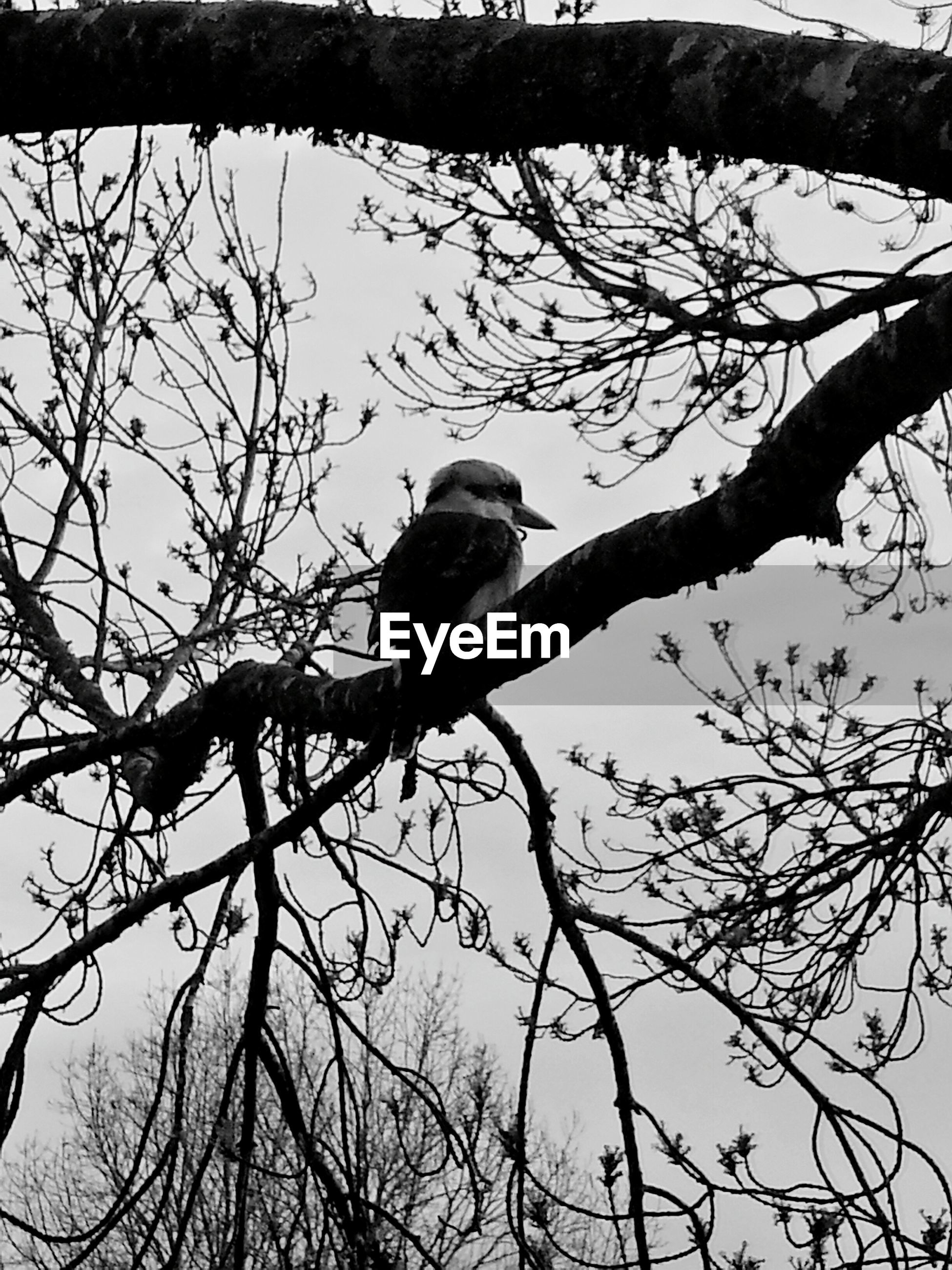 bird, animals in the wild, branch, animal themes, wildlife, tree, one animal, low angle view, bare tree, perching, nature, clear sky, sky, outdoors, day, no people, avian, beauty in nature, full length, silhouette