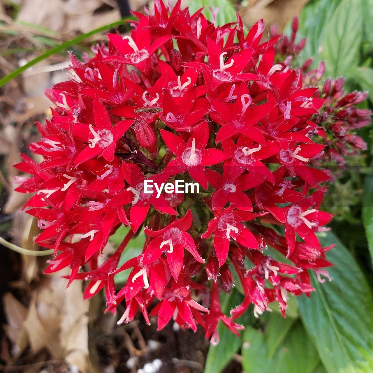 flower, flowering plant, beauty in nature, red, plant, vulnerability, fragility, petal, growth, freshness, close-up, flower head, inflorescence, nature, day, focus on foreground, no people, selective focus, botany, outdoors, springtime, bunch of flowers