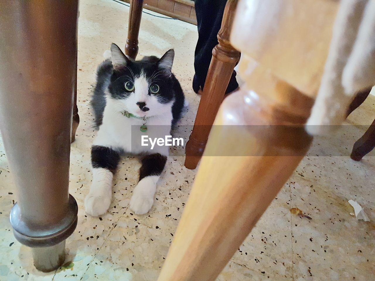 domestic cat, pets, animal themes, domestic animals, looking at camera, feline, mammal, one animal, portrait, indoors, high angle view, no people, home interior, day, close-up