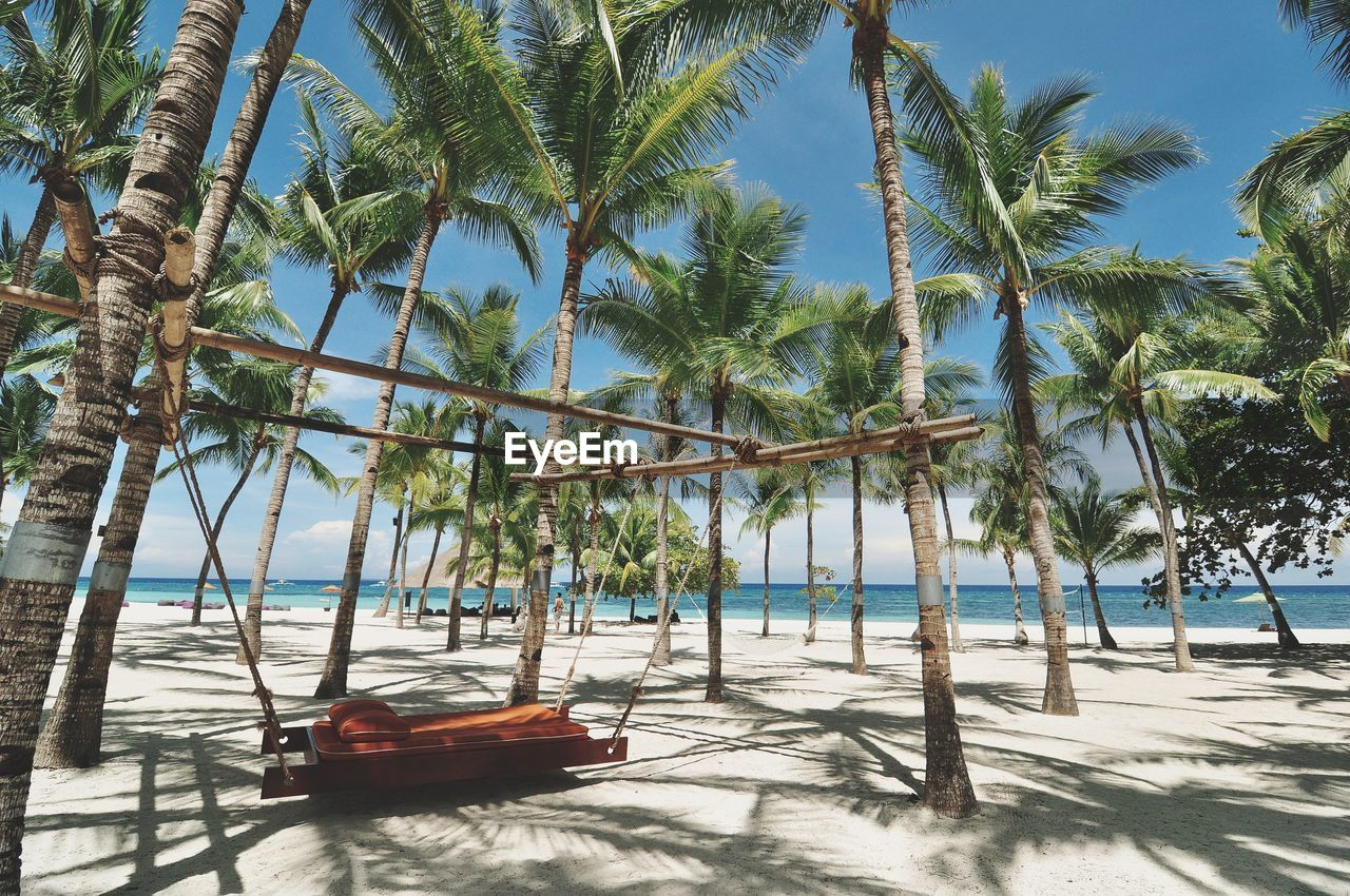 tree, palm tree, tropical climate, beach, plant, water, land, nature, sea, nautical vessel, sky, sand, sunlight, tranquility, beauty in nature, transportation, day, growth, tranquil scene, no people, outdoors, horizon over water, coconut palm tree