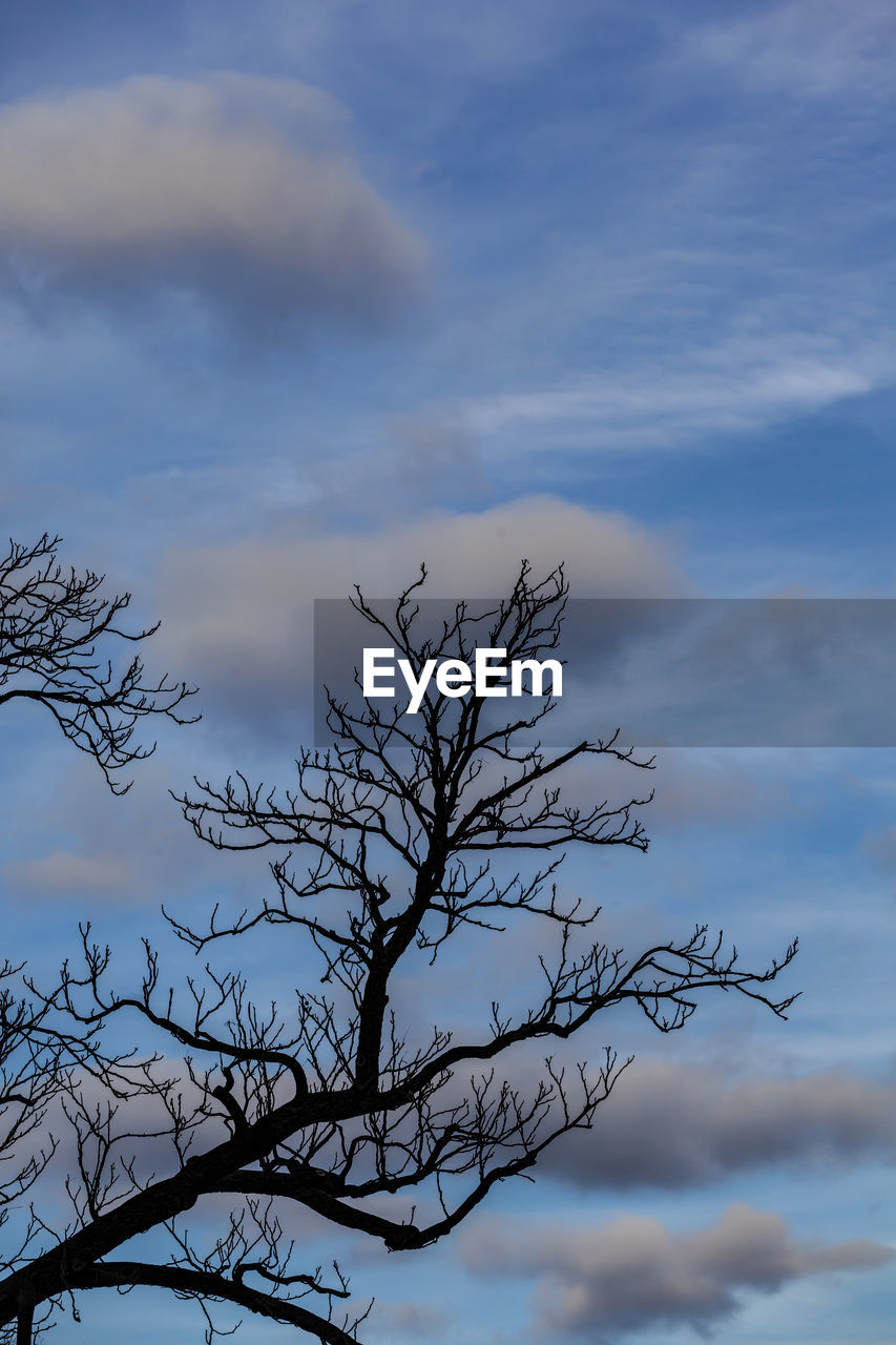 cloud - sky, sky, low angle view, beauty in nature, tree, tranquility, plant, nature, no people, bare tree, branch, outdoors, scenics - nature, day, silhouette, tranquil scene, non-urban scene, blue, growth