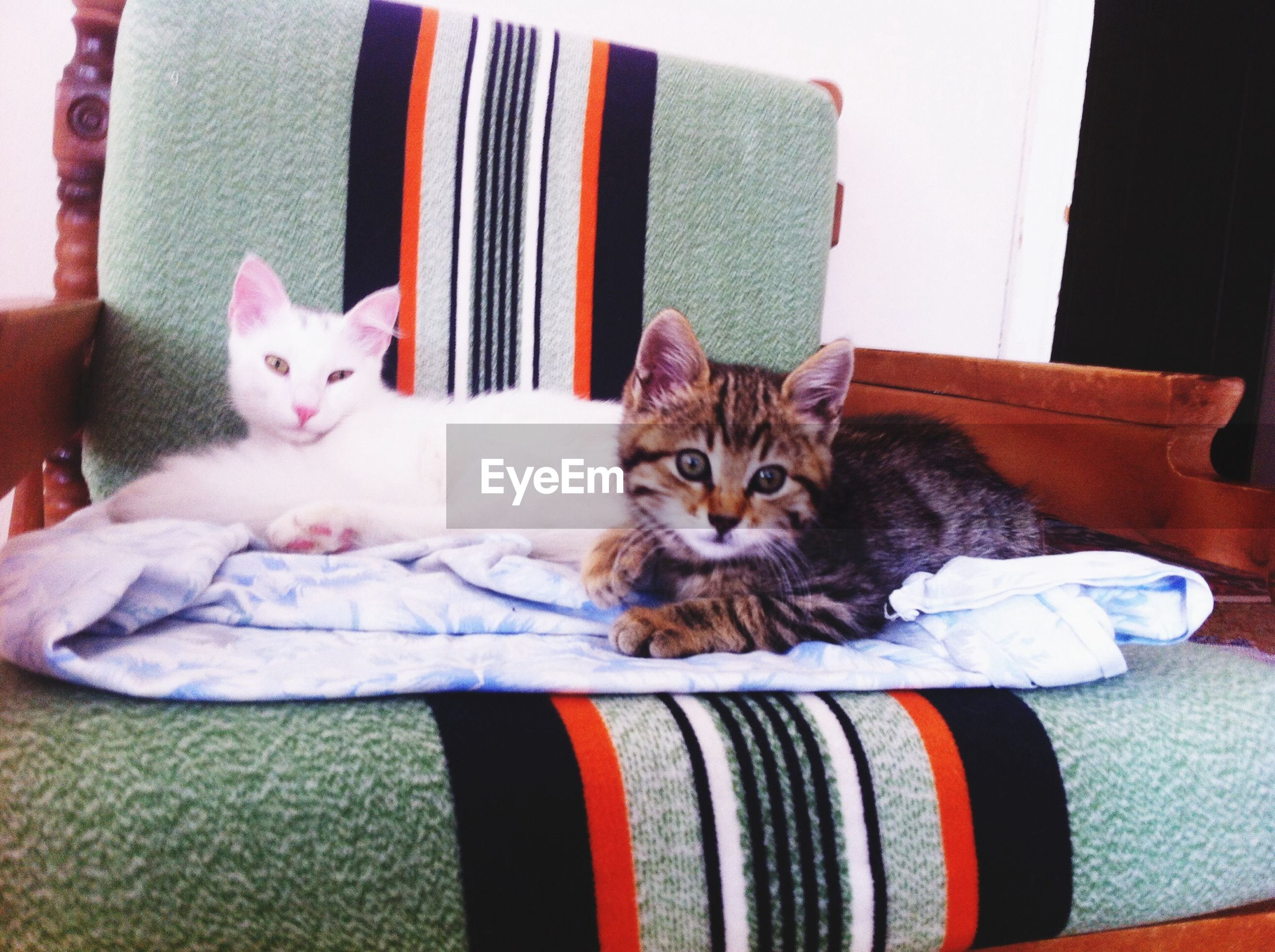 domestic animals, pets, domestic cat, cat, animal themes, mammal, feline, one animal, indoors, relaxation, portrait, looking at camera, resting, lying down, whisker, two animals, home interior, sofa, no people, comfortable