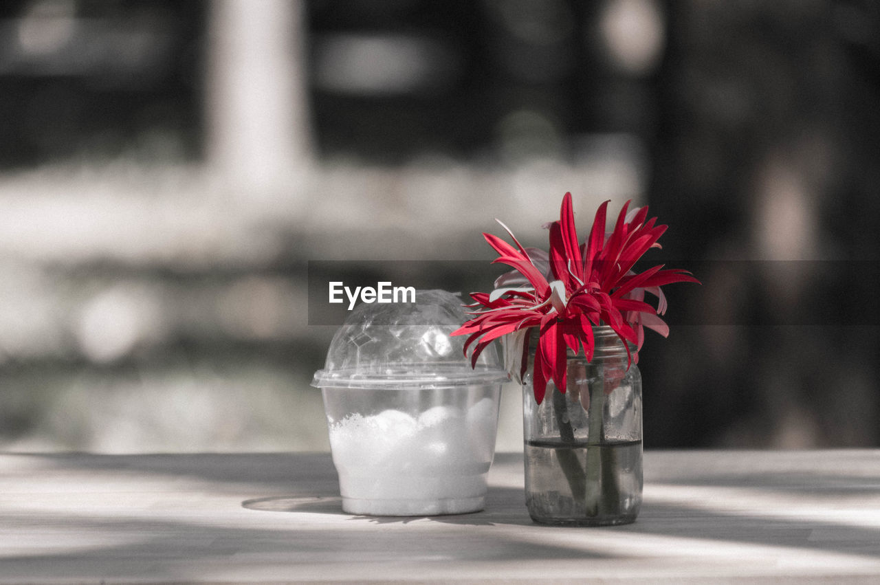 flower, flowering plant, focus on foreground, red, freshness, close-up, no people, plant, petal, nature, day, table, glass - material, beauty in nature, container, transparent, vulnerability, fragility, inflorescence, flower head, glass