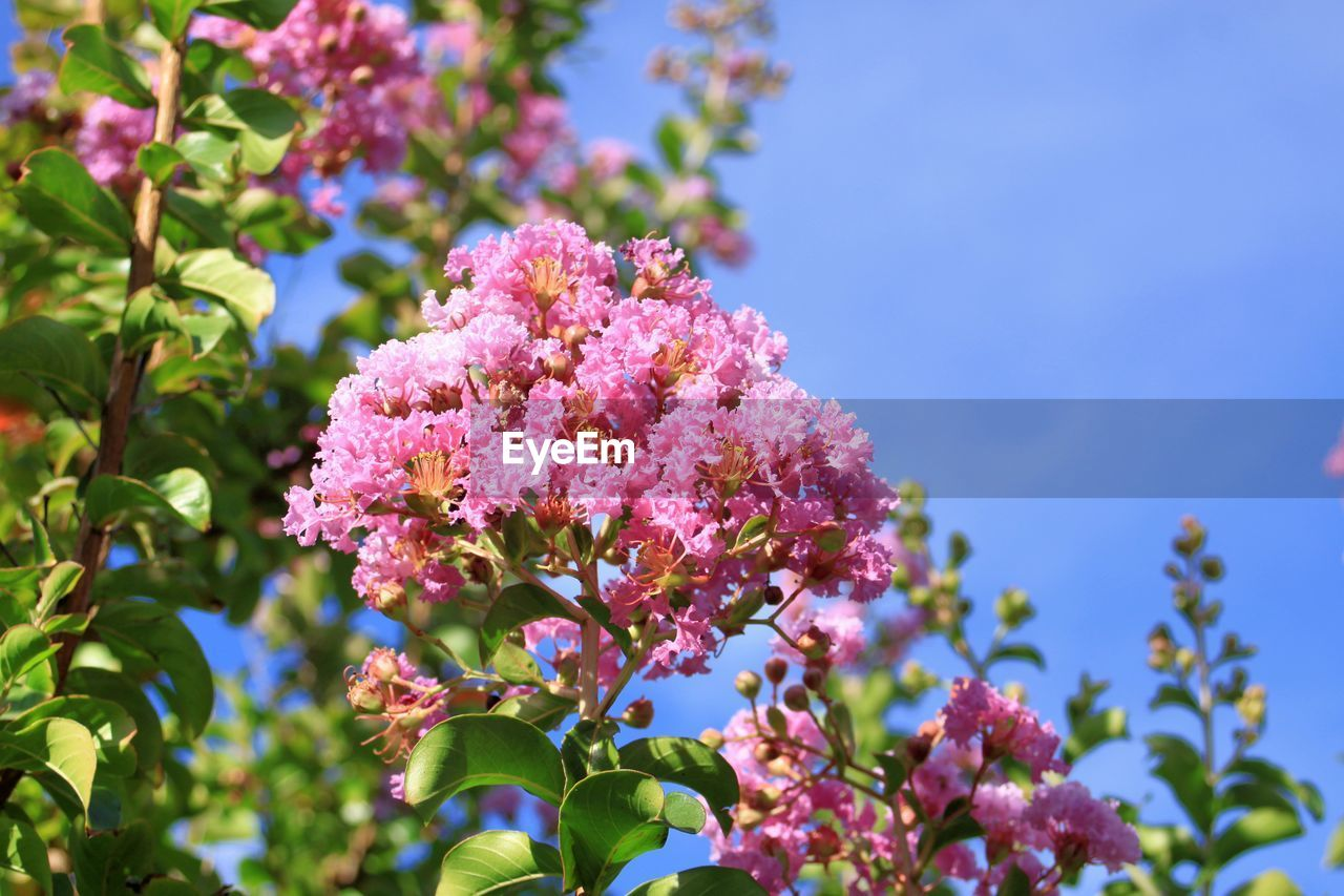 flowering plant, flower, plant, vulnerability, growth, fragility, beauty in nature, freshness, close-up, pink color, nature, lilac, day, no people, low angle view, petal, focus on foreground, plant part, leaf, sunlight, flower head, outdoors, springtime, purple, bunch of flowers