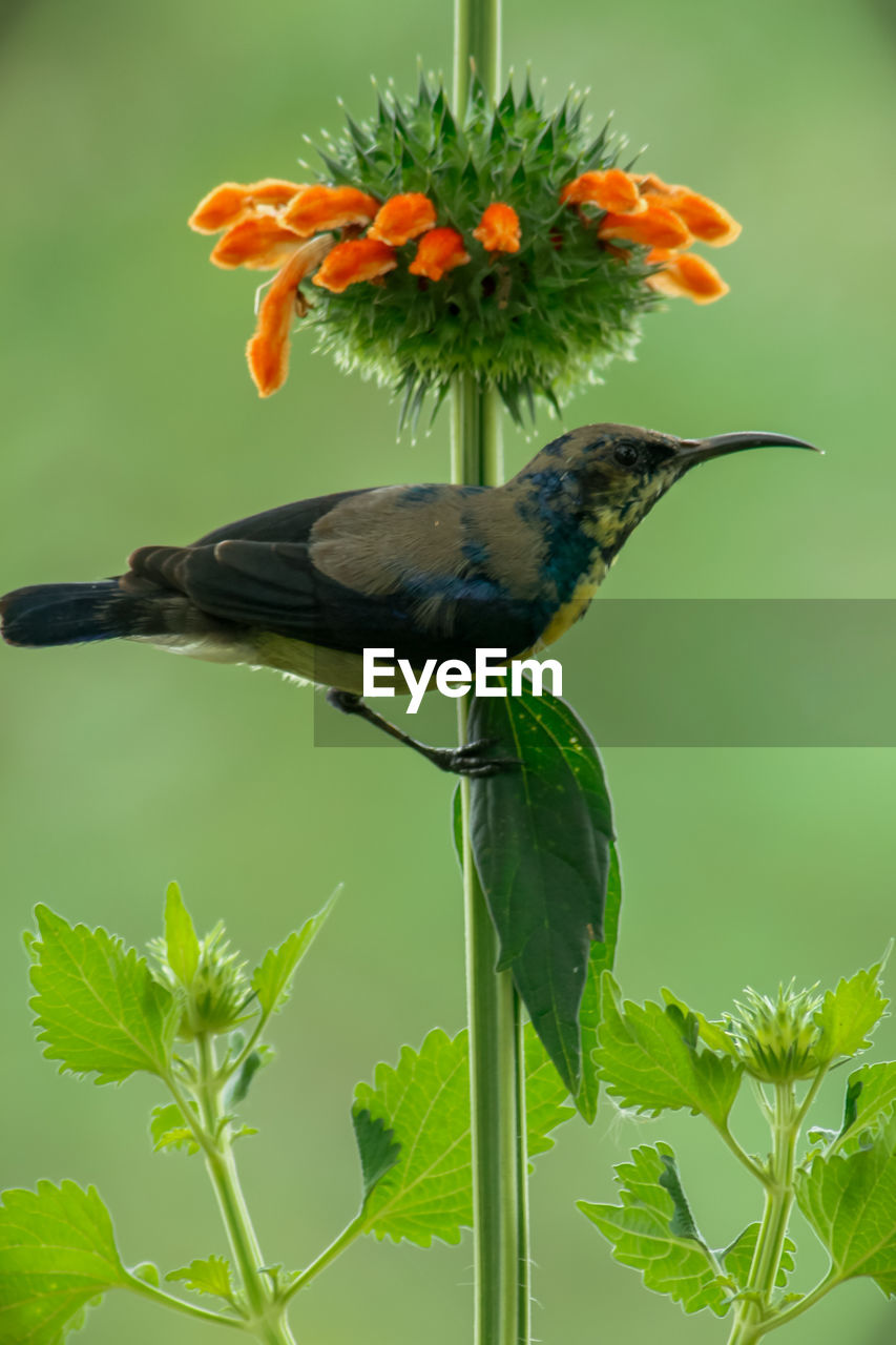 animal themes, bird, animals in the wild, one animal, animal wildlife, leaf, perching, nature, plant, beauty in nature, green color, day, no people, outdoors, growth, flower, tree, close-up
