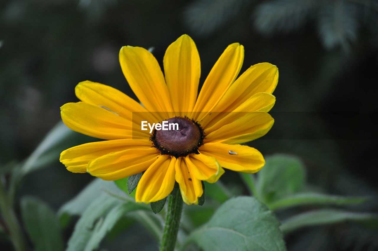 flower, yellow, petal, fragility, freshness, nature, beauty in nature, growth, plant, flower head, day, blooming, no people, outdoors, focus on foreground, one animal, close-up, animal themes, black-eyed susan