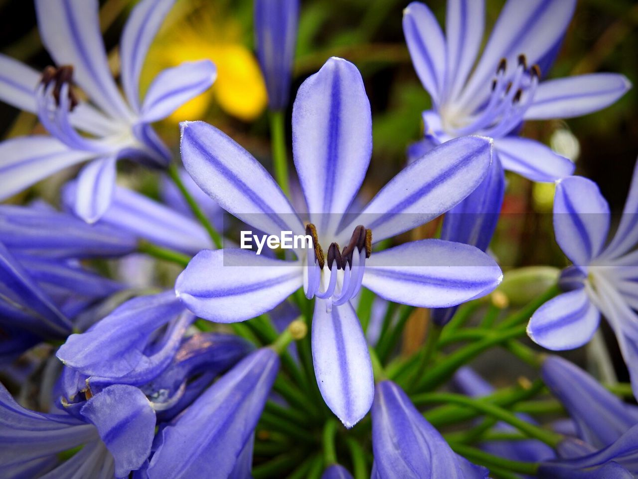 flower, petal, beauty in nature, nature, fragility, flower head, growth, purple, no people, freshness, close-up, outdoors, day, blooming, plant
