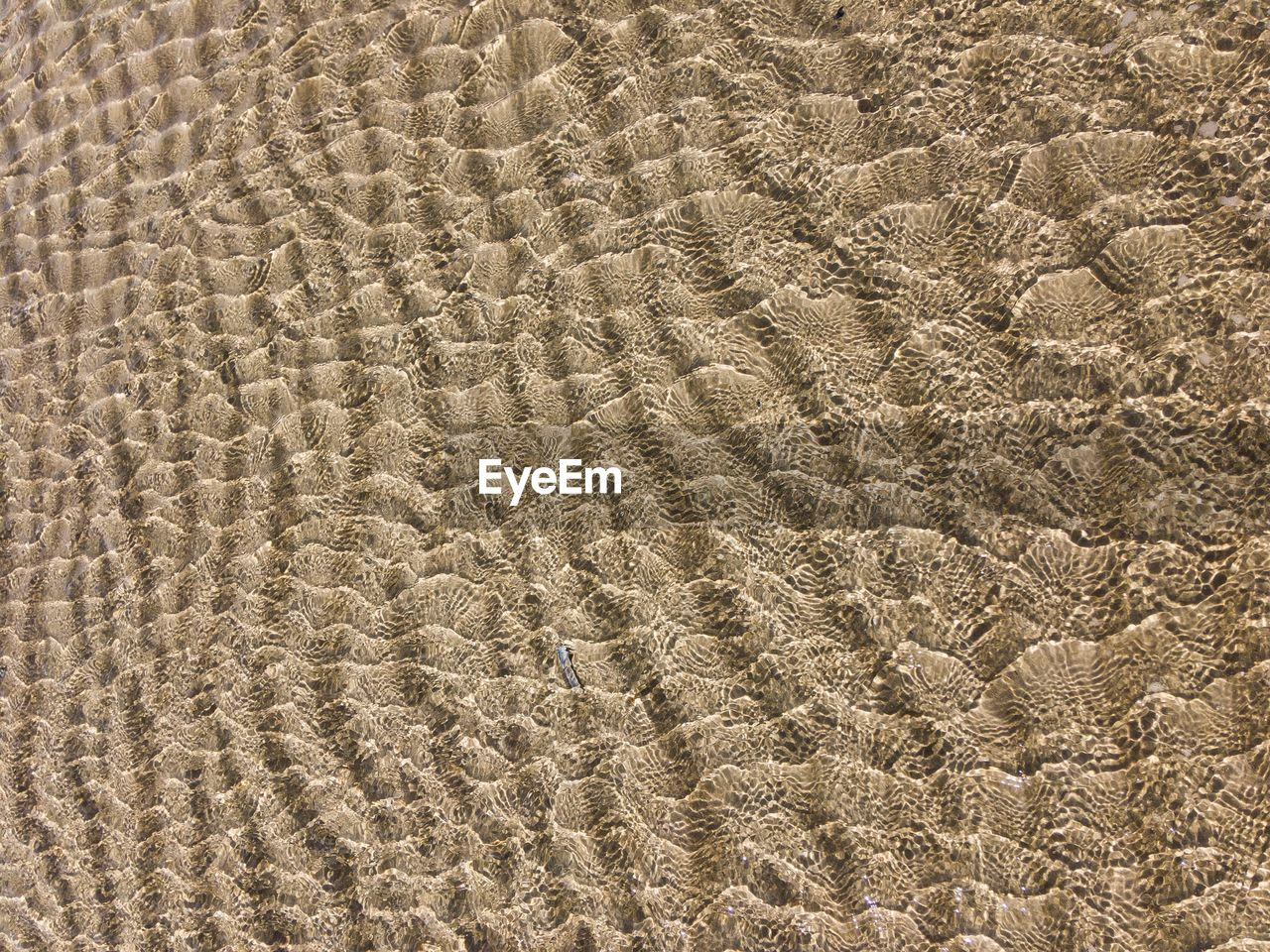 backgrounds, full frame, sand, pattern, land, beach, no people, textured, high angle view, nature, brown, day, beauty in nature, close-up, tranquility, natural pattern, outdoors, wave pattern, animal, sunlight, arid climate