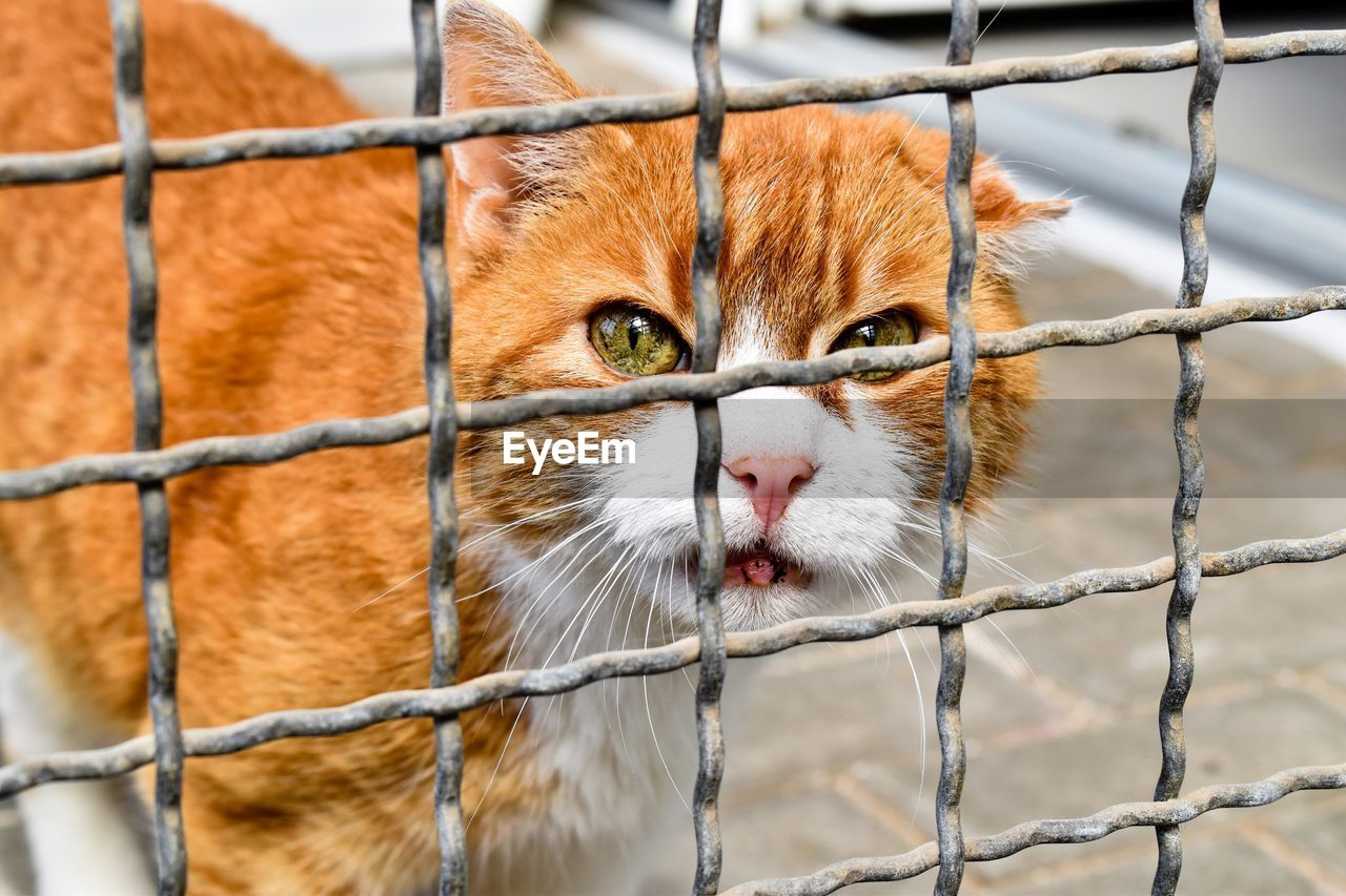 mammal, animal, animal themes, one animal, cat, feline, vertebrate, pets, domestic animals, domestic cat, domestic, no people, fence, day, close-up, metal, animal body part, animals in captivity, focus on foreground, barrier, outdoors, animal head, whisker