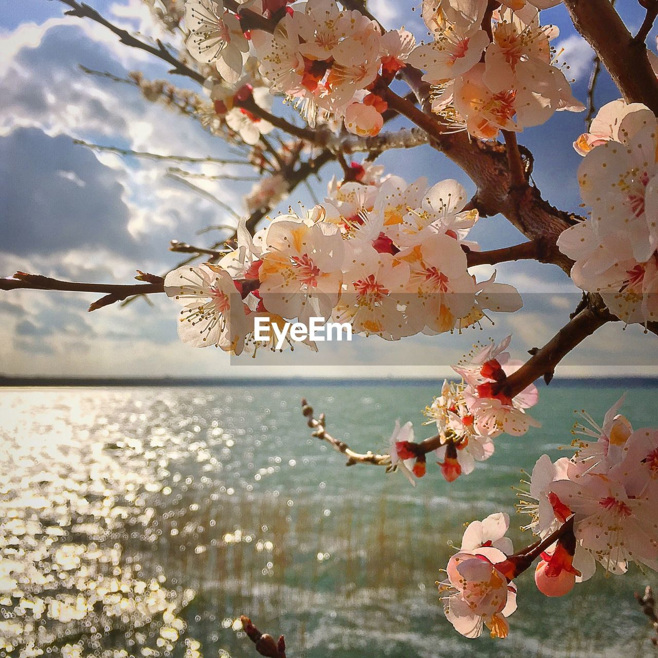 Close-up of flowering tree by river against sky