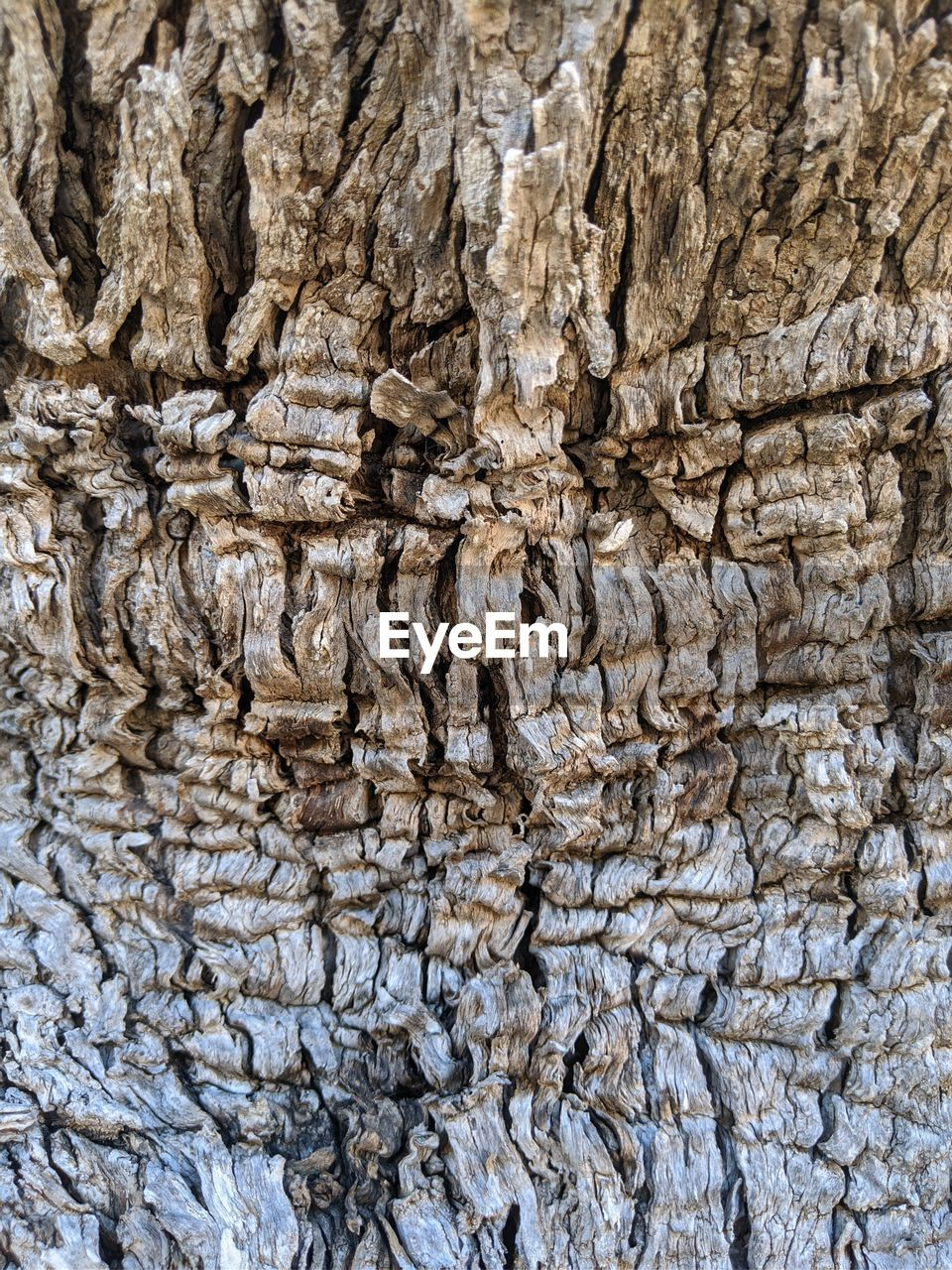 backgrounds, full frame, textured, pattern, rough, tree trunk, no people, trunk, close-up, natural pattern, day, nature, tree, wood - material, outdoors, plant bark, solid, rock, brown, beauty in nature, abstract backgrounds, textured effect, bark, eroded