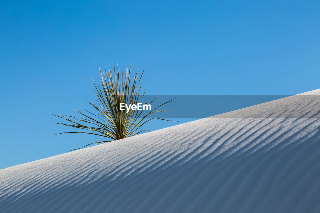 sky, clear sky, blue, nature, day, plant, low angle view, no people, sunlight, copy space, growth, outdoors, sand dune, close-up, pattern, desert, beauty in nature, built structure, scenics - nature, tranquility, climate, arid climate, directly below, palm leaf