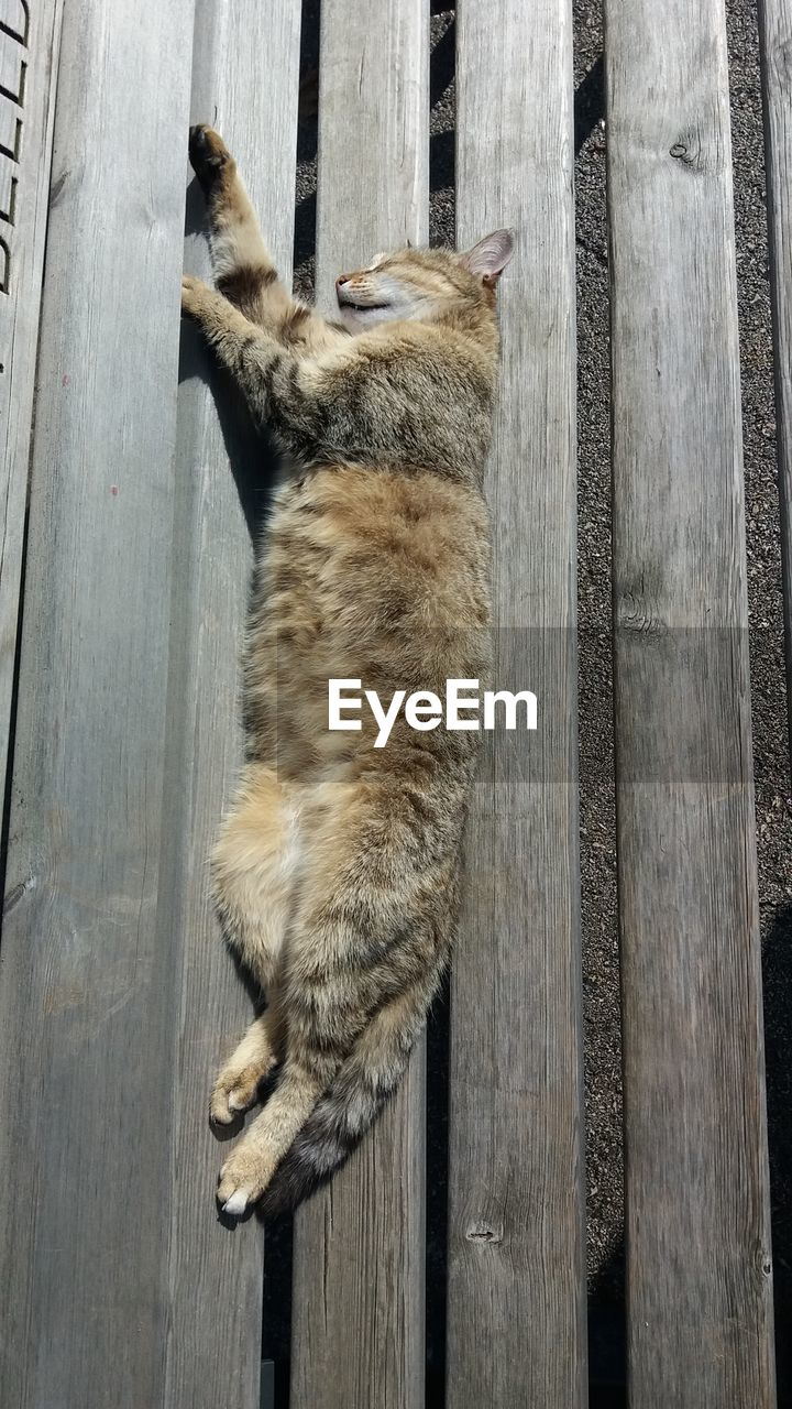 mammal, animal, animal themes, one animal, feline, cat, domestic cat, wood - material, domestic, pets, domestic animals, vertebrate, no people, high angle view, day, relaxation, sleeping, outdoors, directly above, wood, whisker