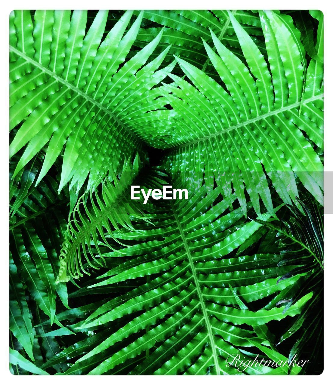 green color, leaf, growth, nature, plant, backgrounds, full frame, day, green, no people, close-up, beauty in nature, outdoors, freshness, fern, frond, fragility