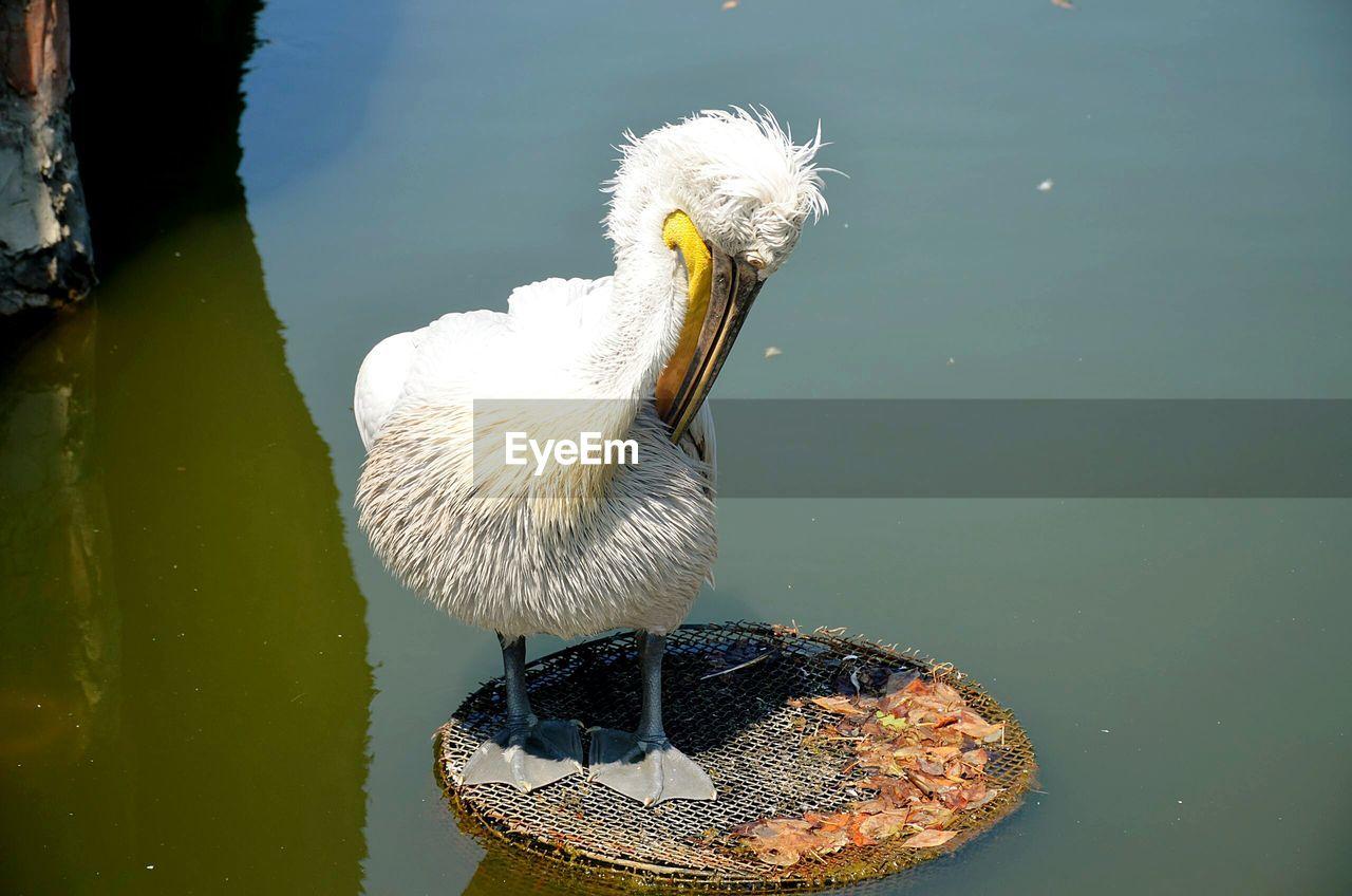 Close-Up Of Pelican In Lake