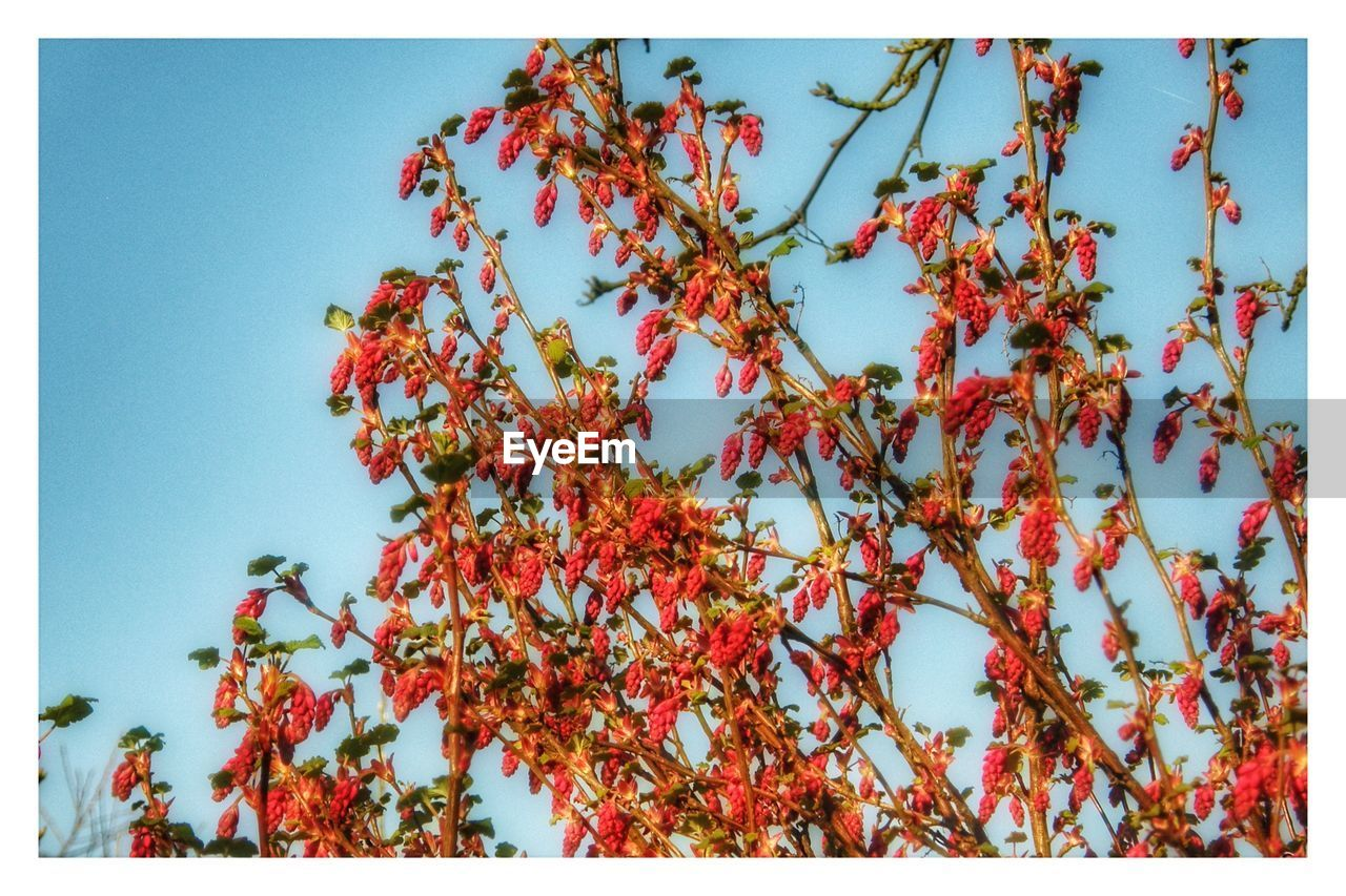 nature, growth, tree, beauty in nature, autumn, low angle view, branch, outdoors, clear sky, day, no people, flower, close-up, fragility, sky, freshness