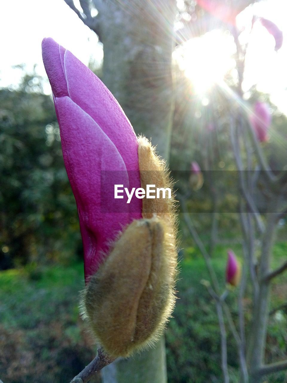 Close-Up Of Pink Flower Bud Outdoors