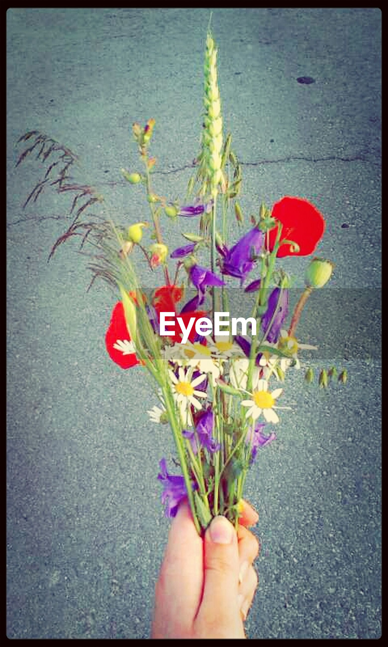 flower, person, personal perspective, holding, part of, transfer print, petal, unrecognizable person, auto post production filter, multi colored, fragility, lifestyles, high angle view, freshness, leisure activity, flower head, leaf