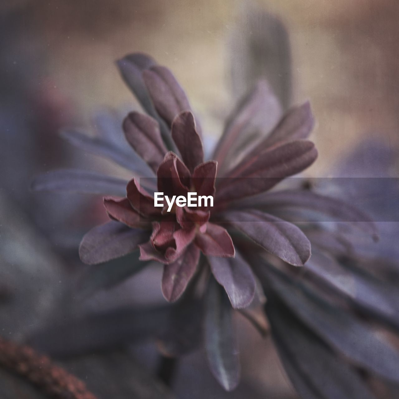 vulnerability, fragility, beauty in nature, close-up, flower, flowering plant, freshness, plant, petal, no people, nature, inflorescence, flower head, growth, selective focus, day, focus on foreground, water, outdoors, purple