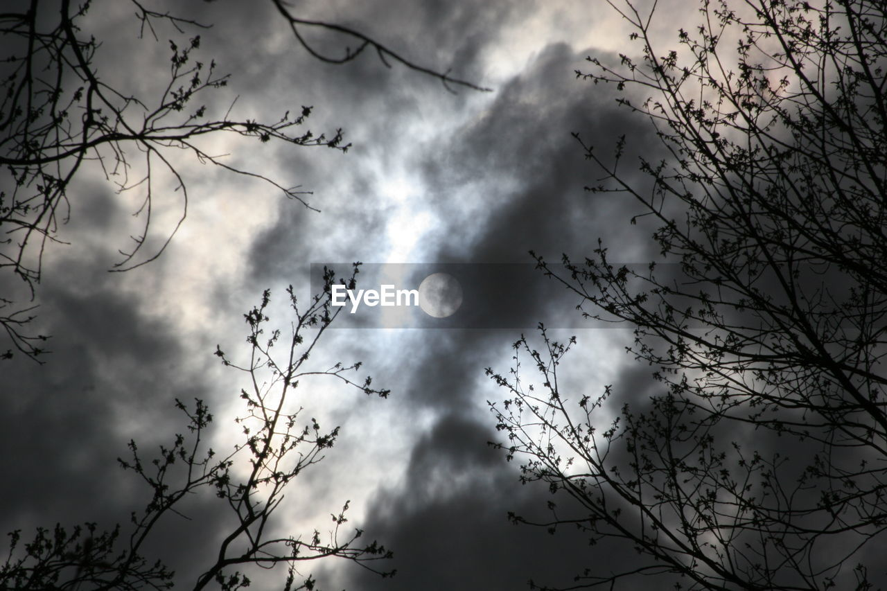 low angle view, sky, cloud - sky, nature, outdoors, bird, beauty in nature, tree, branch, mid-air, flying, day, no people, animal themes