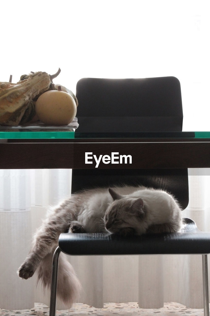 Cat Sleeping On Chair By Dining Table At Home