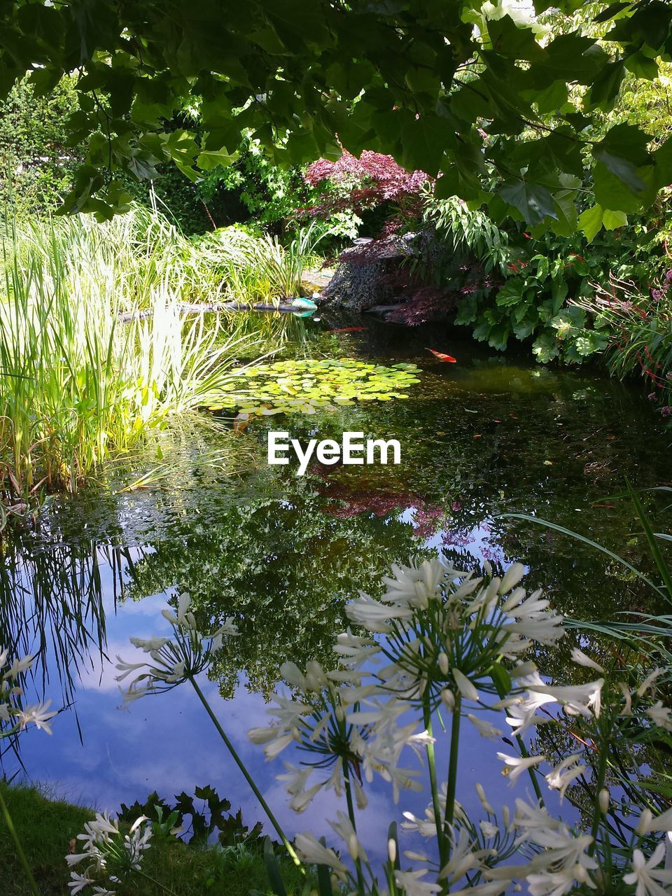 water, nature, reflection, flower, growth, plant, no people, beauty in nature, leaf, lake, day, grass, outdoors