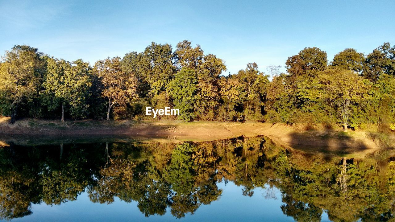 tree, reflection, nature, water, beauty in nature, tranquil scene, waterfront, scenics, lake, tranquility, outdoors, no people, standing water, day, forest, sky, growth