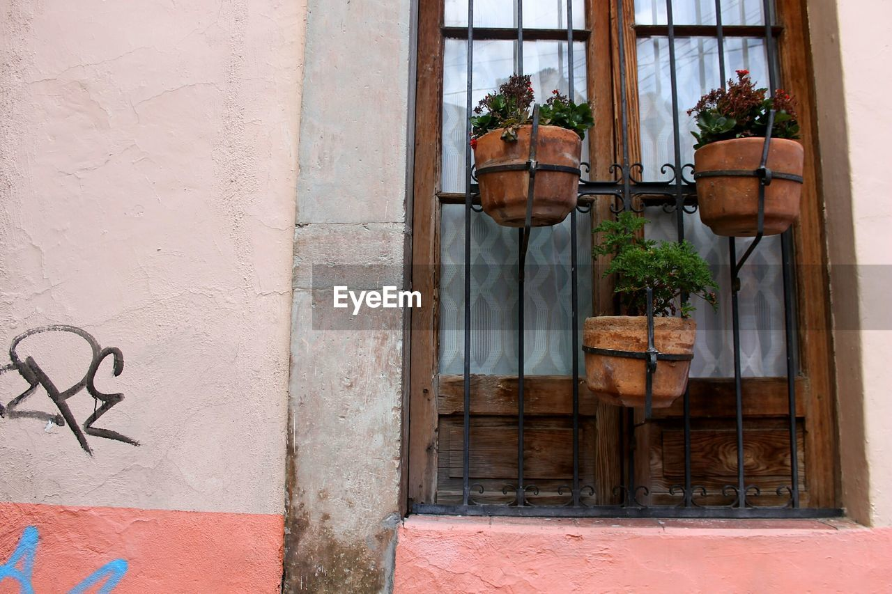 architecture, window, built structure, potted plant, door, building exterior, no people, plant, day, outdoors, window box