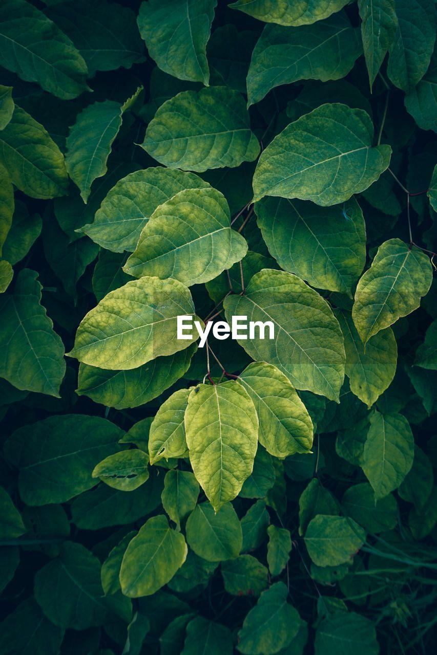 Green plant leaves textured in autumn season