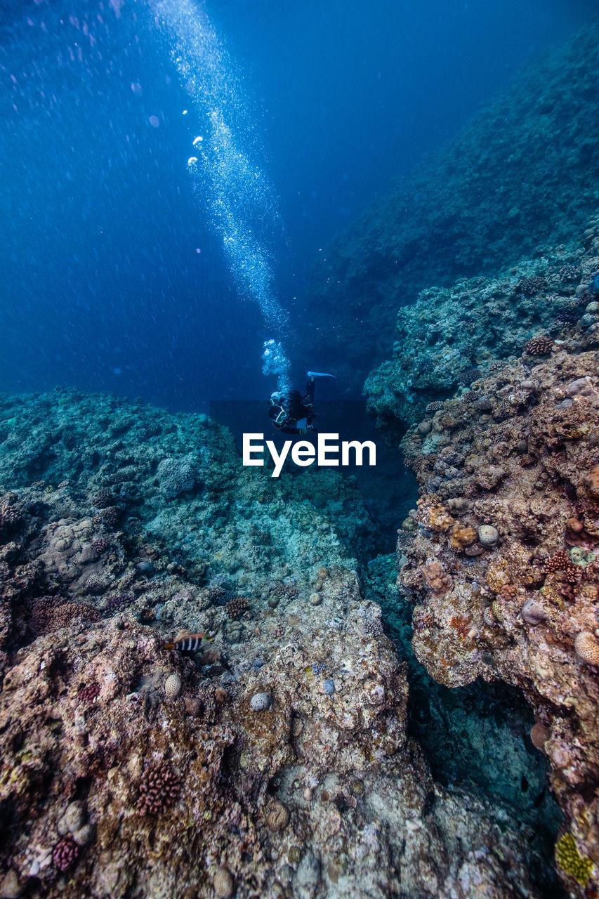 Diver In Sea